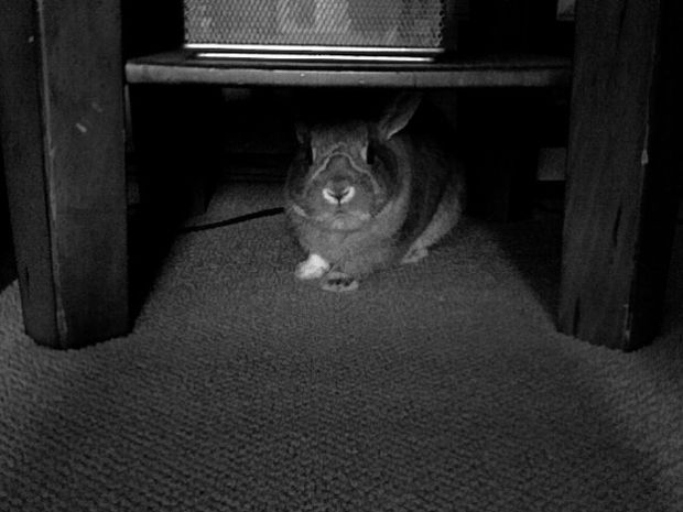 rabbitunder